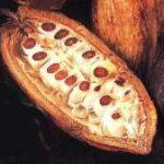 Lusk s kakaovými boby
